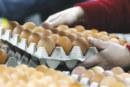 A l'approche de Ramadan, baisse des droits de douane pour les œufs