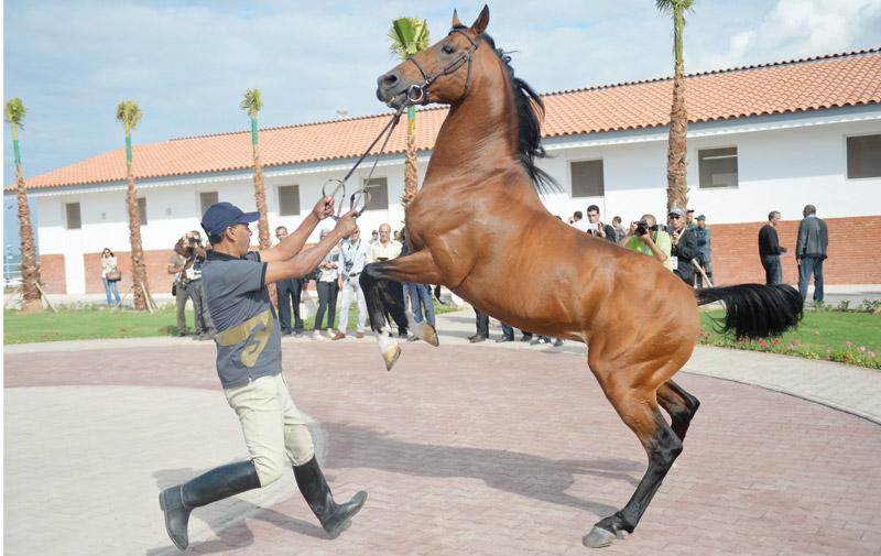 Le nouveau haras national d'El jadida: Un espace pour le cheval mis aux normes internationales