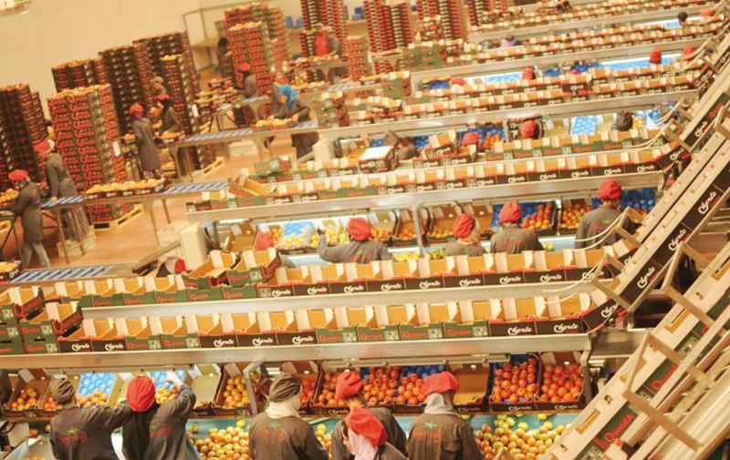 Fruits et légumineuses: Le groupe marocain «Matysha» primé à Berlin