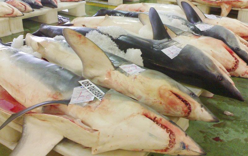 Huile de foie de requin: Une première étape vers  un assainissement total