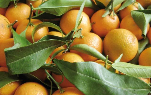 4ème édition du Carrefour des fournisseurs de l'industrie agroalimentaire : Que de nouveautés cette année !