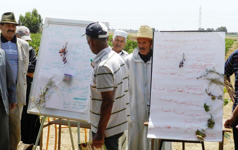 Conseil agricole: L'ONCA sème à tout vent
