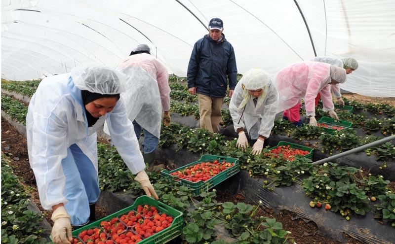 Débat sur le secteur des fruits rouges à Rabat
