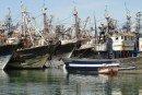 Laâyoune : Les produits de la mer mis en avant