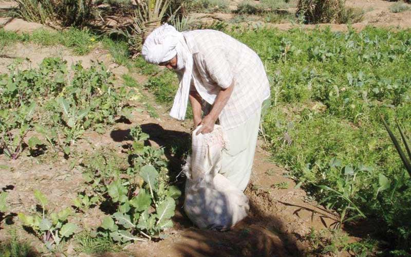 Tan Tan: 29 millions dh pour le secteur agricole