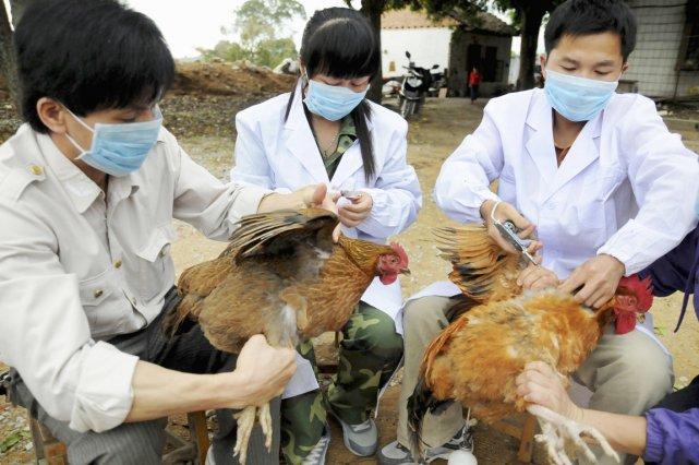 Grippe aviaire: état d'alerte à Hong Kong