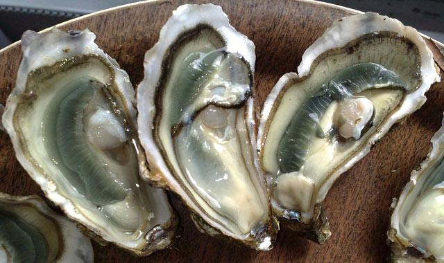 Les huîtres Pascal Lorcy, un projet pour développer l'ostréiculture