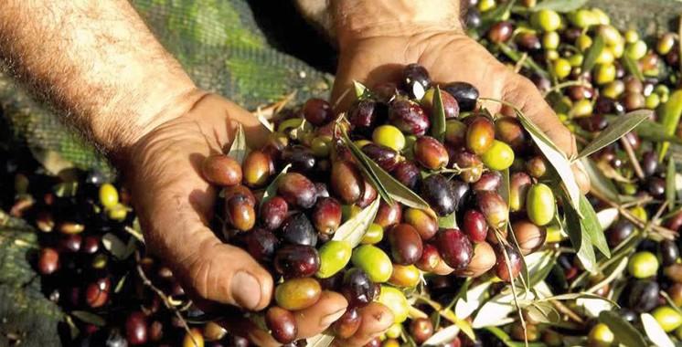 Italie: L'huile d'olive marocaine au rendez-vous du Salon «Sol & Agrifood»