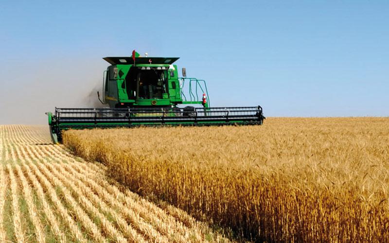 Céréales d'automne: Une hausse à trois chiffres pour Doukkala-Abda
