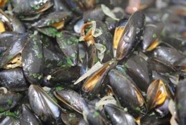 Agadir: Interdiction de la récolte et de la commercialisation des coquillages