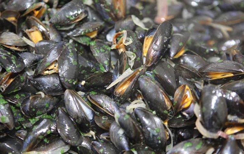 El Jadida et Safi : Le ramassage  de coquillages à nouveau autorisé