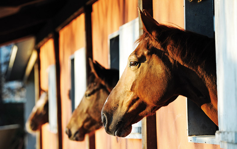 Salon du cheval d'El Jadida: Les métiers  du cheval