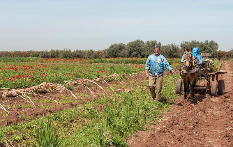 Assurance agricole: Le produit suscite l'engouement des opérateurs
