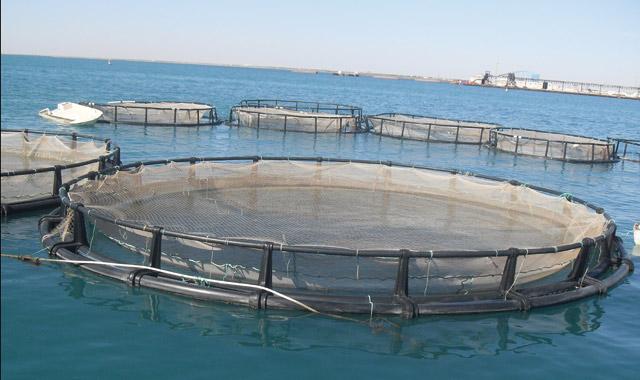 Aquaculture au Maroc: Entre potentiel et manque à gagner