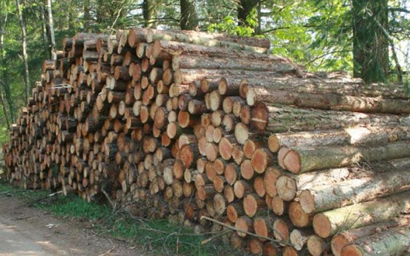 Moyen Atlas : La consommation de bois atteint 10 tonnes/ménage annuellement