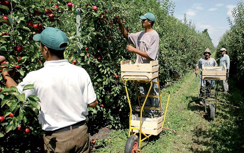 Campagne agricole 2014-2015: Jackpot pour le Maroc