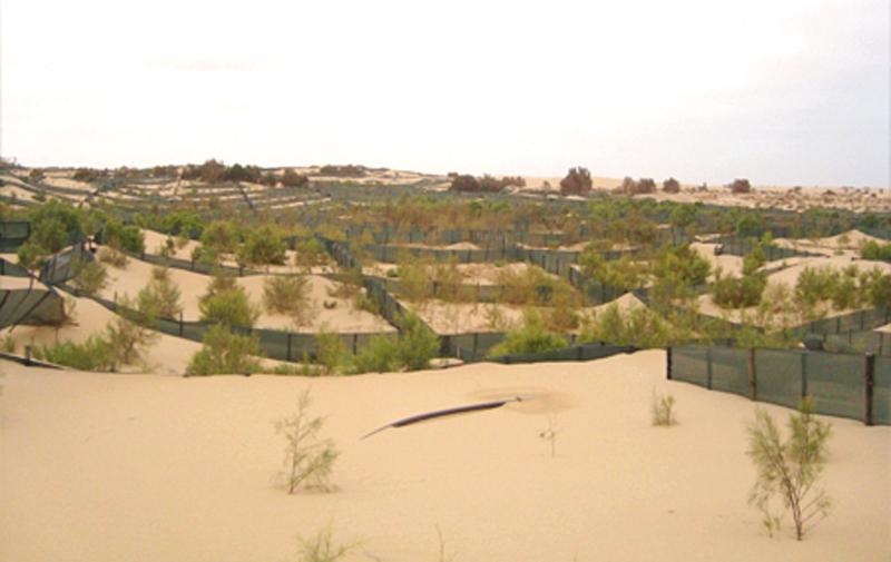 Laâyoune: Plus de 974 ha de ceintures vertes créés