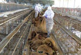 Le Maroc renforce sa sécurité frontalière suite à la détection de cas de grippe aviaire en Algérie