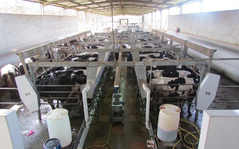 20 millions de litres de lait produits annuellement au niveau de la province de Sefrou