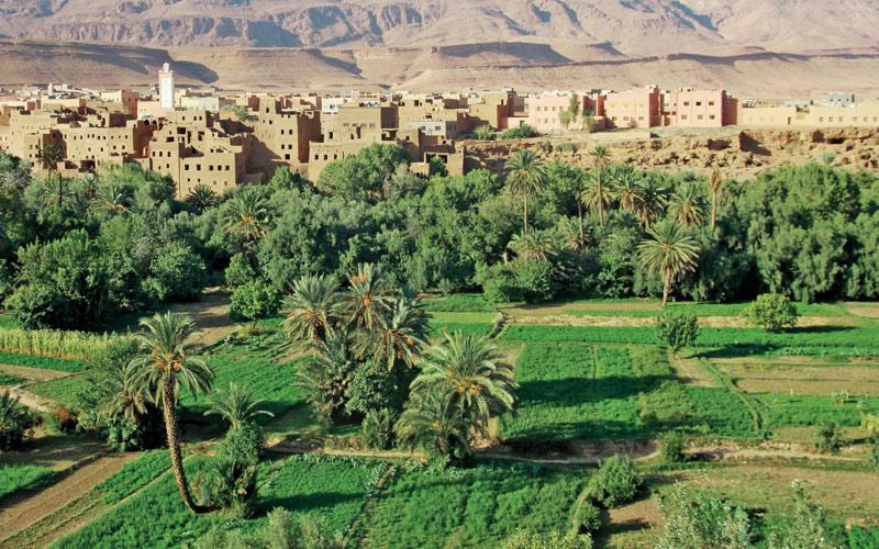 Développement des zones oasiennes et de l'arganier: L'ANDZOA décline sa stratégie