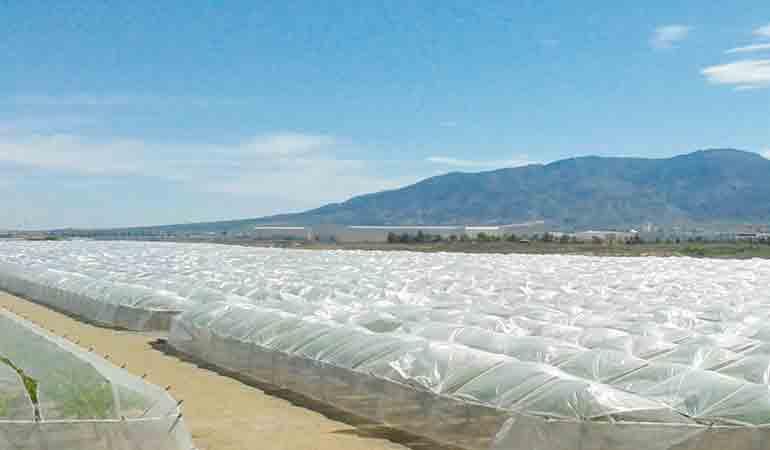 Films agricoles usagés contaminés en libre circulation au Maroc : La Fédération  marocaine de plasturgie s'insurge