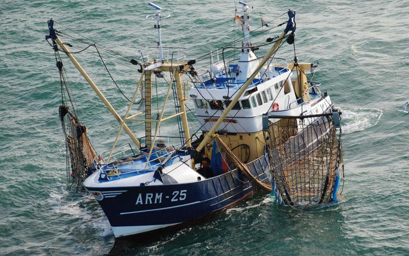 Débarquements de poisson/ La pêche  a été bonne en 2015