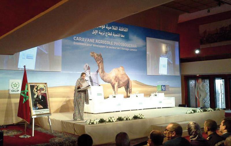Lancement de la «Caravane agricole Phosboucraâ 2015» à Laâyoune: L'élevage camelin en vedette