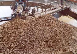 Agriculture : Canne à sucre : Les subventions croissent