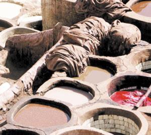 Télex : Levée des restrictions sur les exportations des cuirs et peaux