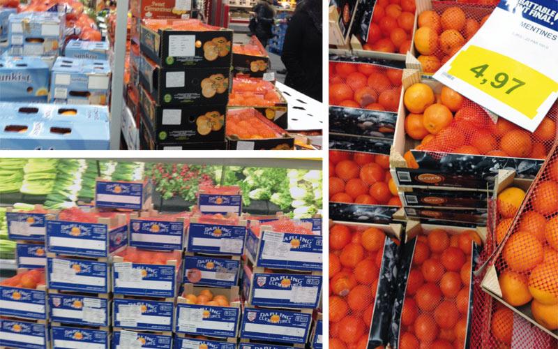 Agrumes: La clémentine marocaine superstar du marché canadien