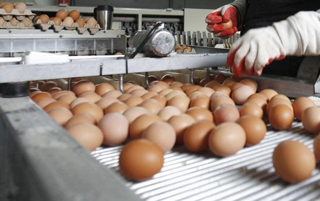 Journée nationale de l'œuf célébrée le 15 janvier: L'œuf sous toutes ses formes…