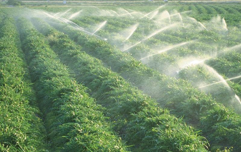 Coopération agricole: Un partenariat durable bâti entre le Maroc et l'Allemagne