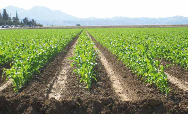 Le Registre National Agricole sera lancé début 2016