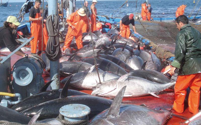 Pêche côtière et artisanale: Les débarquements grimpent en valeur