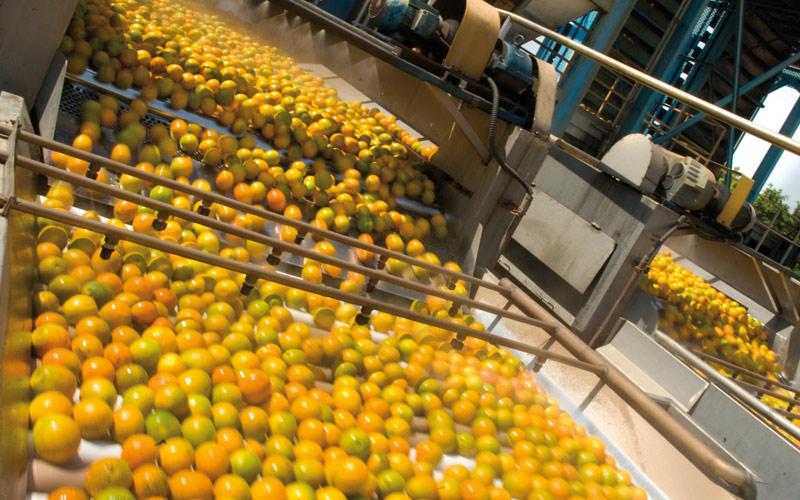Les exportations d'agrumes font face à une concurrence de plus en plus rude