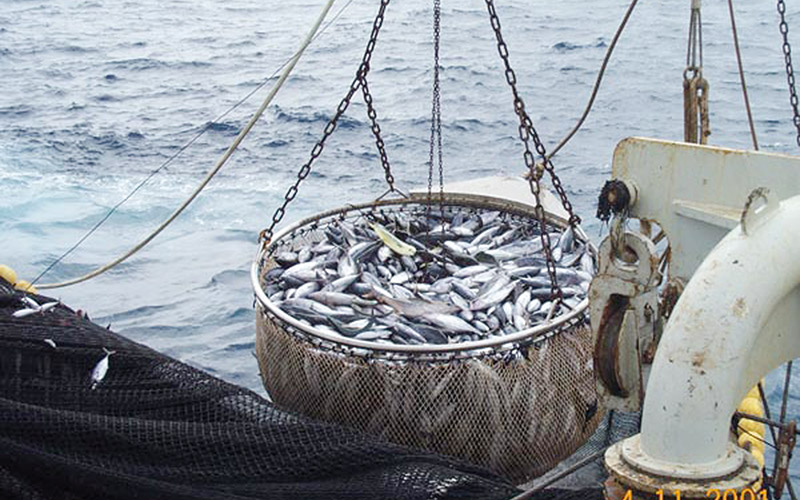 Nouveau protocole de pêche Maroc-UE: Le satisfecit de Madrid