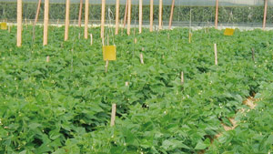 Oued Eddahab-Lagouira  : 1,67 milliard DH pour l'agriculture sur 11 ans