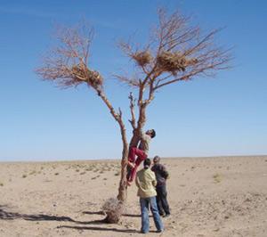 Agadir : La lutte contre la désertification s'organise