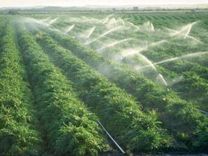 2,5 milliards de dirhams pour la valorisation de l'agriculture du nord