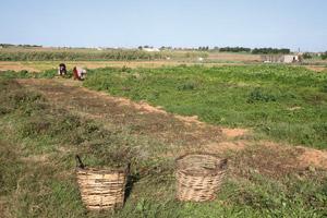 Khénifra : Vers la mise à niveau de la petite et moyenne irrigation