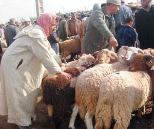 Enquête : Aïd El Kébir, la fête de tous les sacrifices