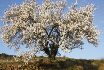 Rencontre à Oujda sur la valorisation de la filière  des amandes dans l'Oriental