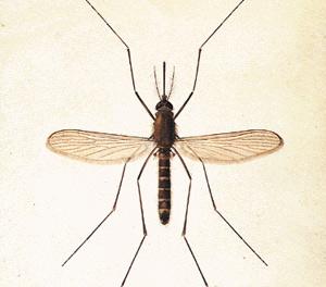 High-tech : Un logiciel qui chasse les moustiques