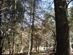 Vers une sauvegarde du patrimoine forestier