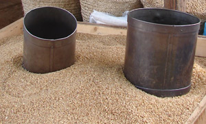 Le stock de blé tendre couvre 5 mois des besoins industriels