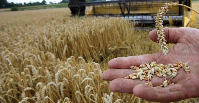 ONICL : La collecte des céréales cumulée atteint 18,1 millions de quintaux à fin janvier