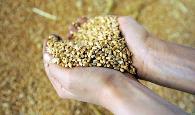 Céréales: 21 millions de quintaux dans les silos à fin juillet
