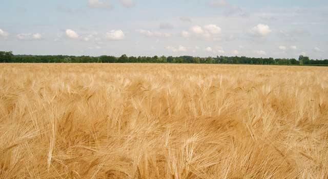La caravane OCP-céréales 2012 fait escale à Settat