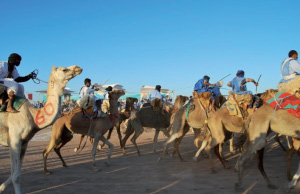 Laâyoune : 198,6 MDH pour hisser l'élevage camelin dans la période 2011-2020