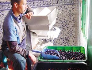 GEI, une expérience concluante en huile d'olive